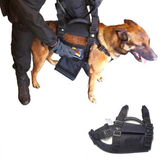 Le chien pour agent cynophile