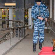 chien-detecteur-explosifs-1000x500